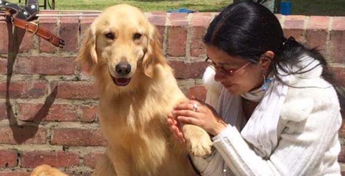 Así es como algunos caninos se vuelven héroes de los humanos