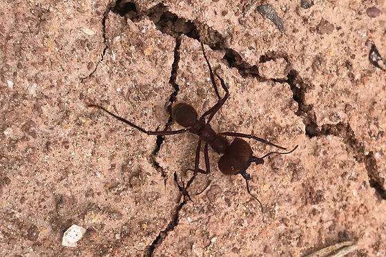 El camino de la hormiga