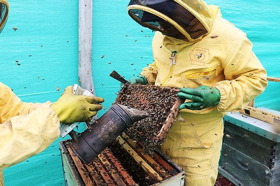 El litigio de la abeja