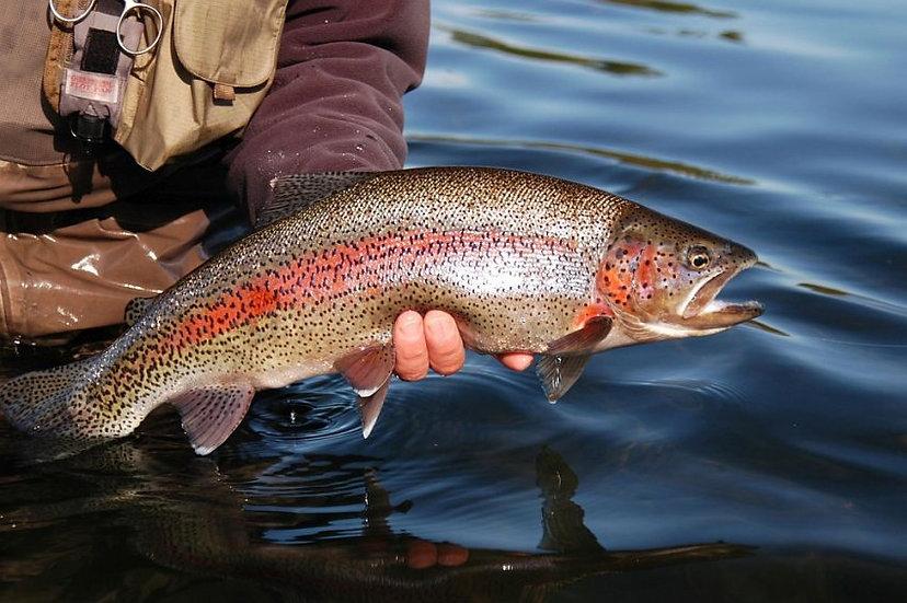 Рыболовный тур 1-10 человек  Камчатка (река Опала)