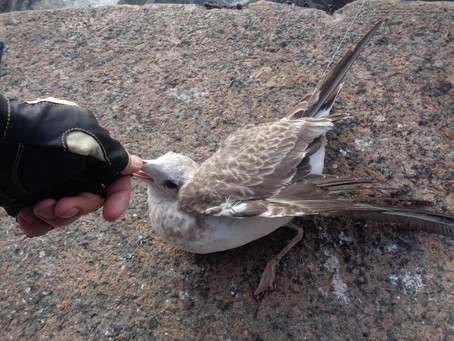 Дневник спиннингиста: Хотел поймать рыбу, а поймал птицу
