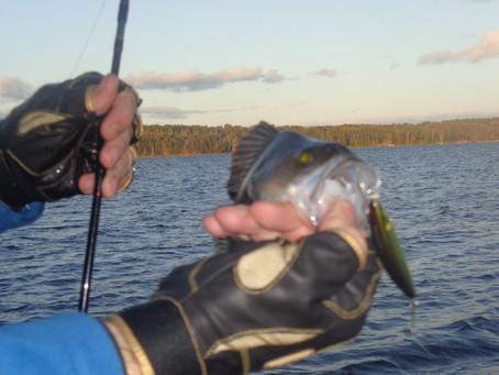Дневник спиннингиста: Рыбалка в Московском регионе