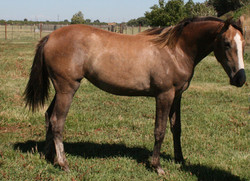 2010 Filly (Indiscreet x Oh Star)