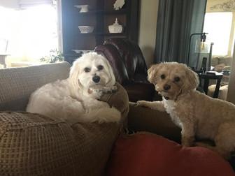 Joey & Wrigley