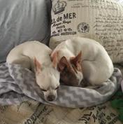 Violet & Dizzy