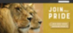 JI_Lion bar.jpg