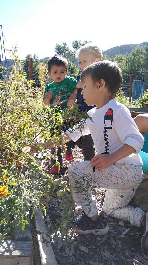 Sonflower Christian Preschool Garden.jpg