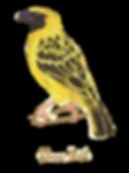 weaverbird.png