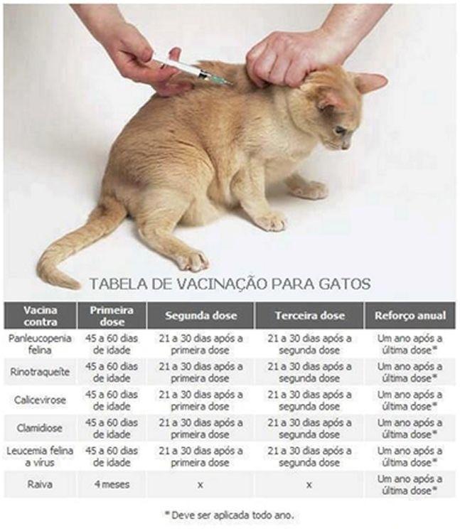 Saiba quando vacinar seu gatinho! 😺