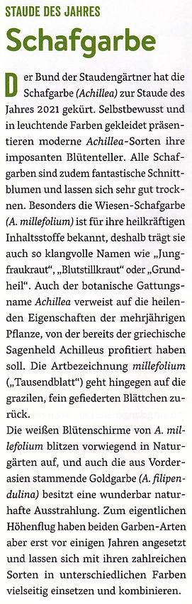 Schafgarbe.jpg