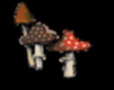 web_image_mushrooms.png