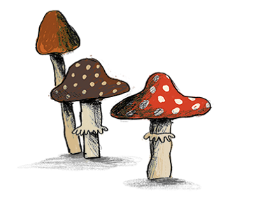 web_image_mushrooms.png