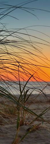 #0228 - Clark's Cove Beach Grass Sunset.