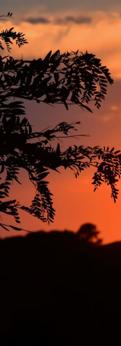 #0158 - Golden Tree Silhouettes.jpg