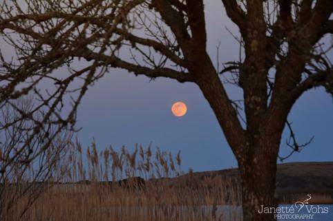 Pink Super Moon over Long Pond