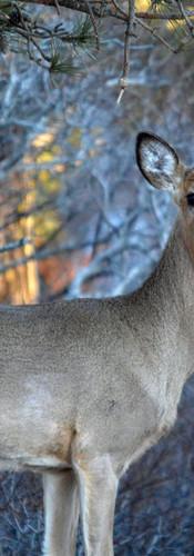 #0372 - Full Deer with Golden Leaves.jpg