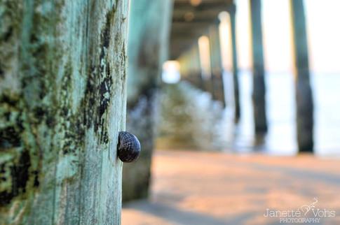 #0053 - Snail Home