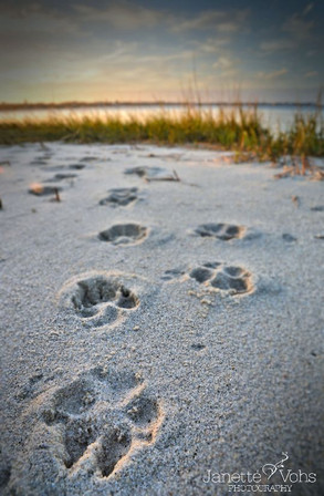 #0135 - Prints in the Sand