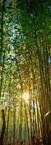 #0226 - Sunset Thru the Bamboo.jpg