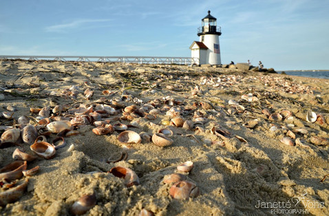 #0136 - Shells at Brant Point