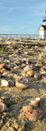 #0136 - Shells at Brant Point.jpg