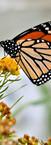 #0421 - Monarch Close Up.jpg
