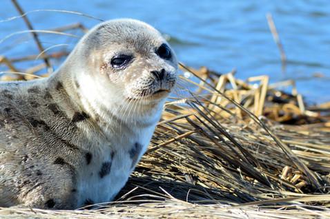 #0010 - Seal