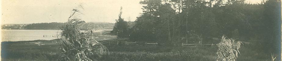 cornstalksfield.jpg