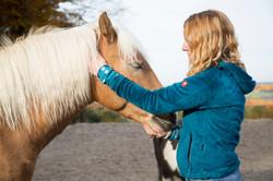 Akupunkturpunkte beim Pferd Stressre