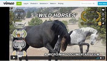 wild horses video.jpg