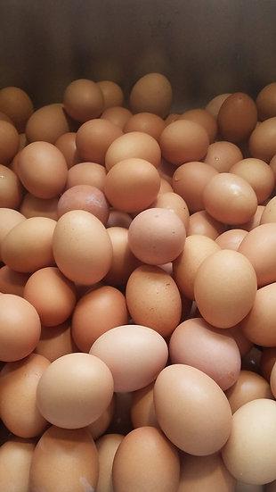 Farm Fresh Eggs (dozen)