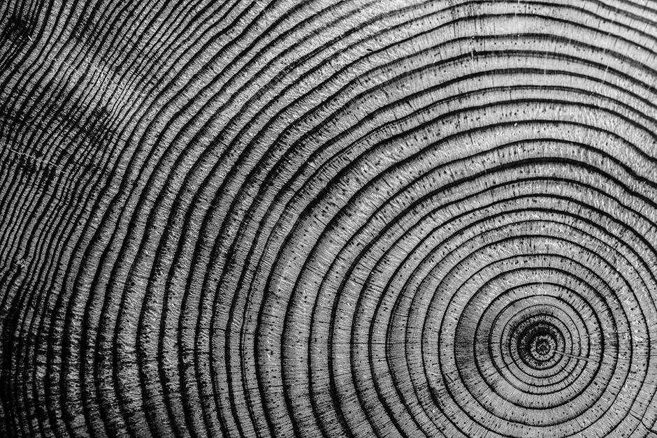Oak Rings Oak Tree Black and White.jpg