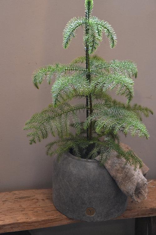 Brynxz Planter Basic Majestic vintage