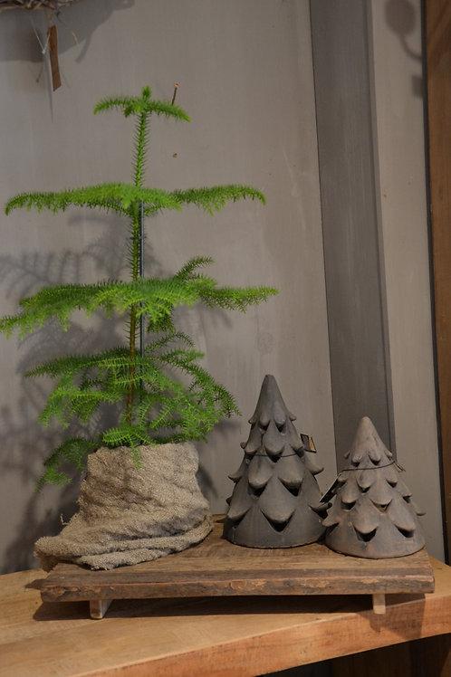 X-Tree Organic Tealight M