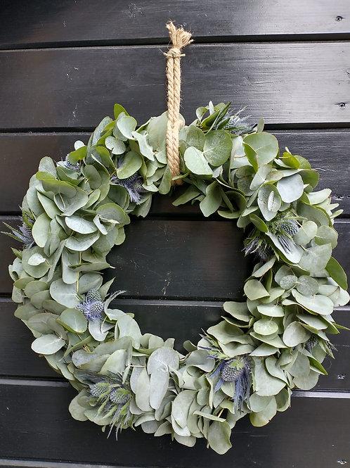 Eucalyptus krans Distel 40cm