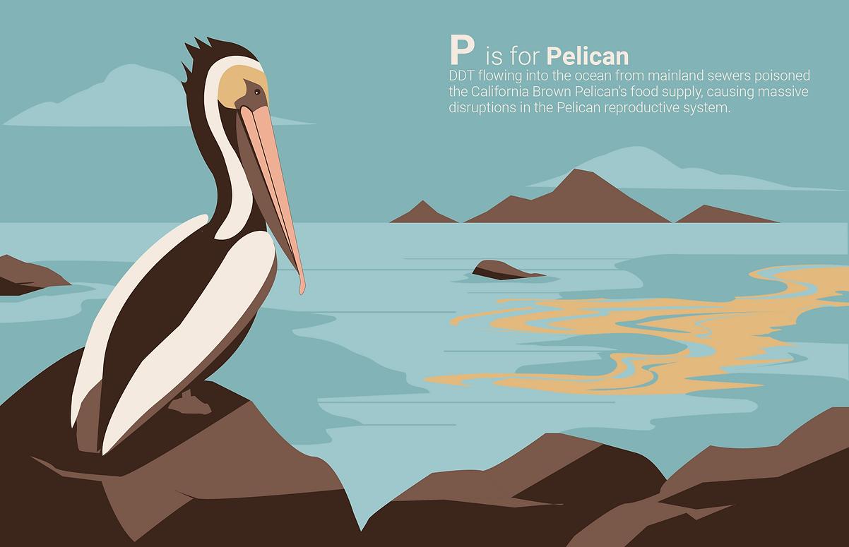 PelicanFinal.png