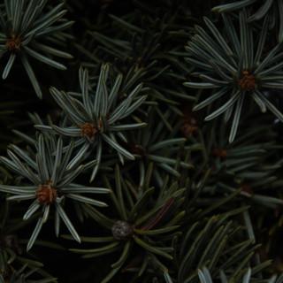 012020_Pflanzen-49.jpg