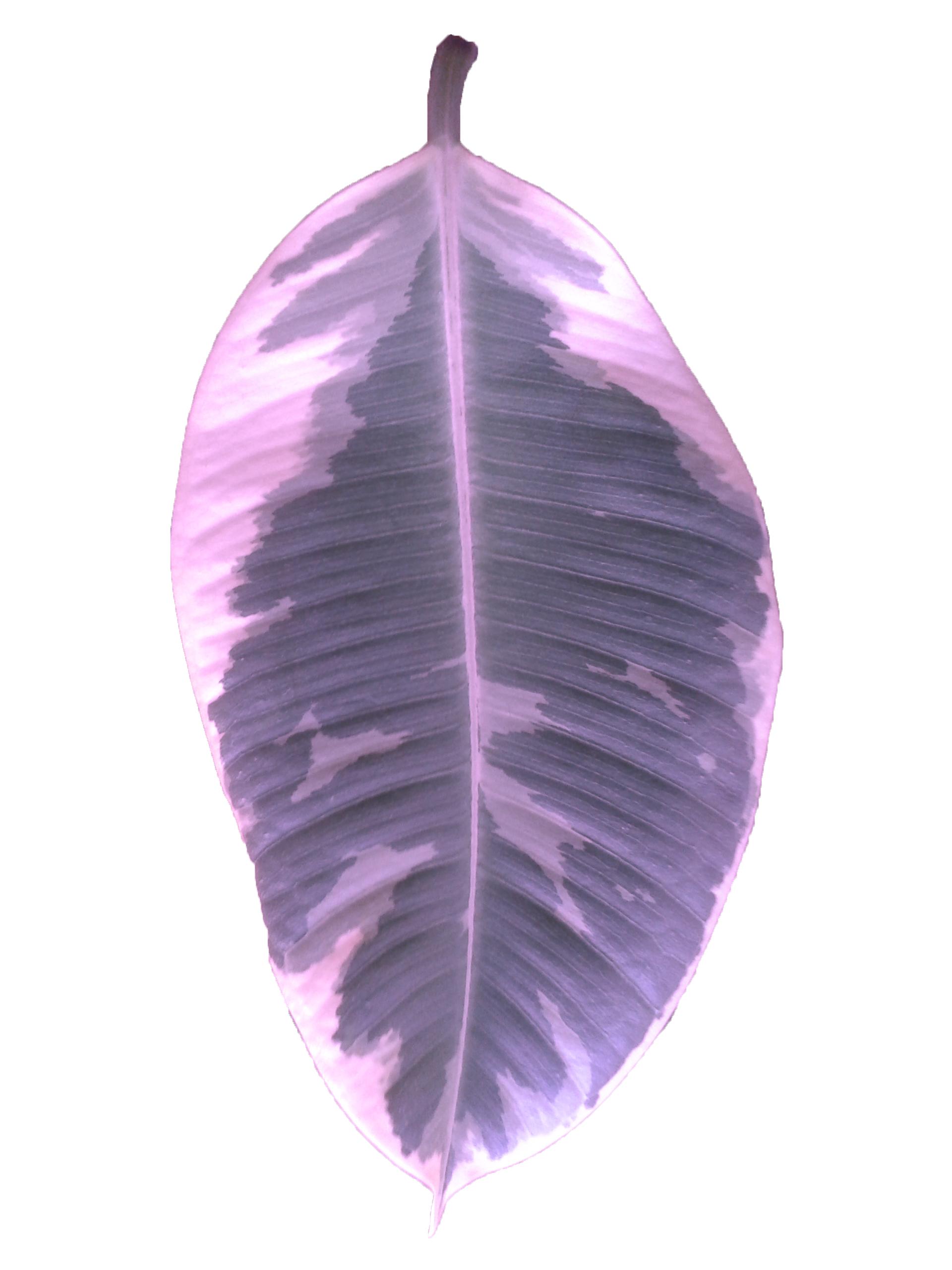 Colorized Plant III