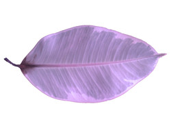 Colorized Plant I