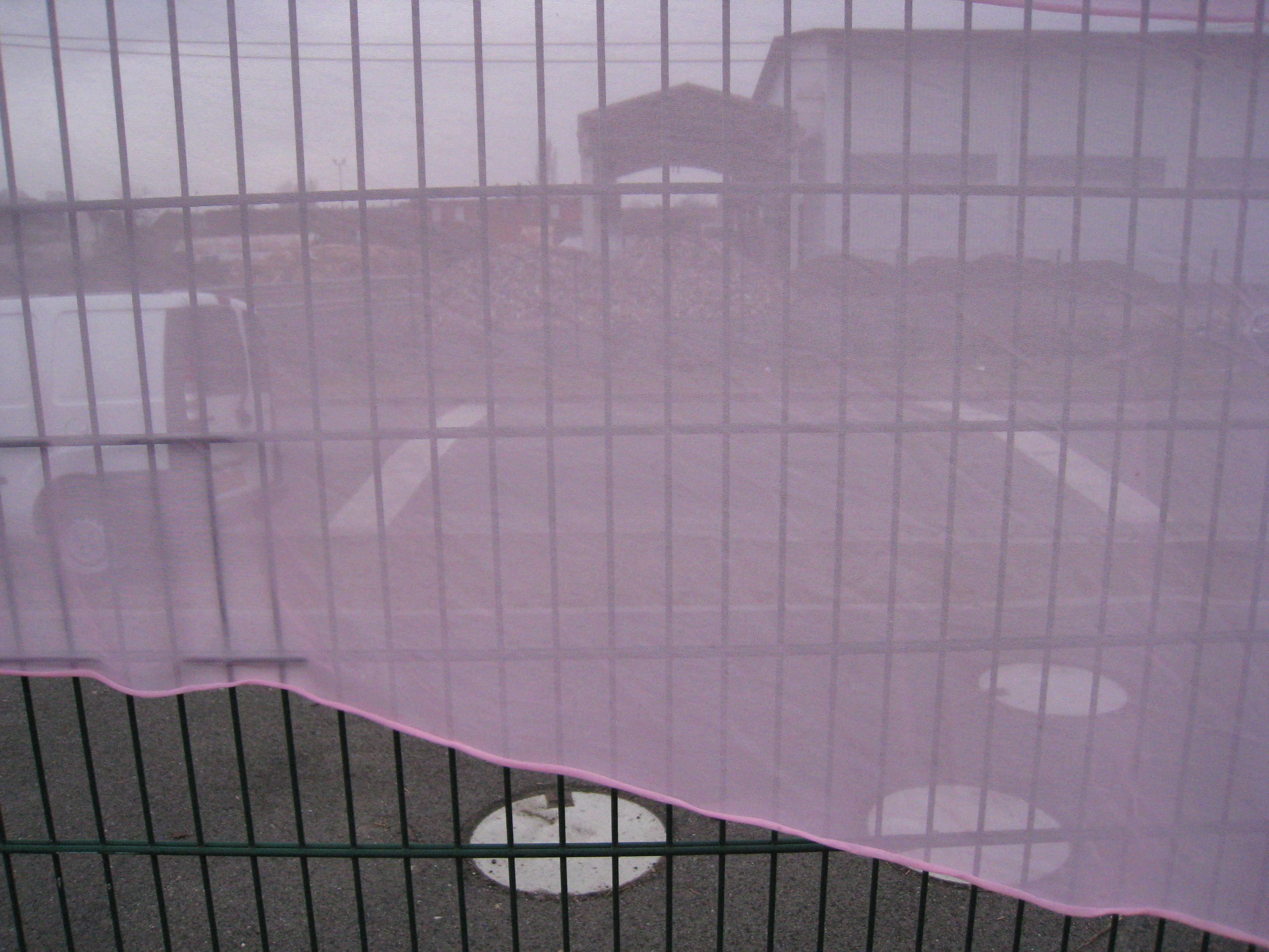 Pink Veil au port 8