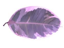 Colorized Plant II