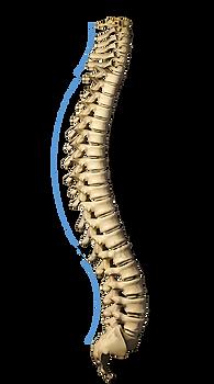 Le tre curve della colonna vertebrale