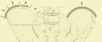 Scoliosi, maturità scheletrica, segno di Risser: ossificazione cartilagine cresta iliaca