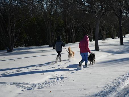 Texas Snow Day - Run Anyway