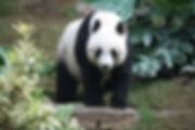 Grosser_Panda.JPG