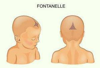 1997 circa -Fontanelle surgical rape.jpg