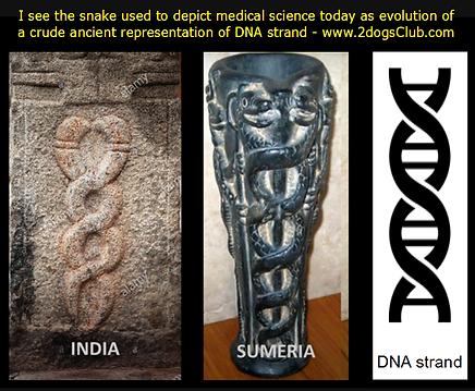 Card  Ancient DNA Strand Adaptation 100p