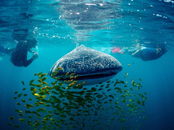 The Best of Baja California Sur