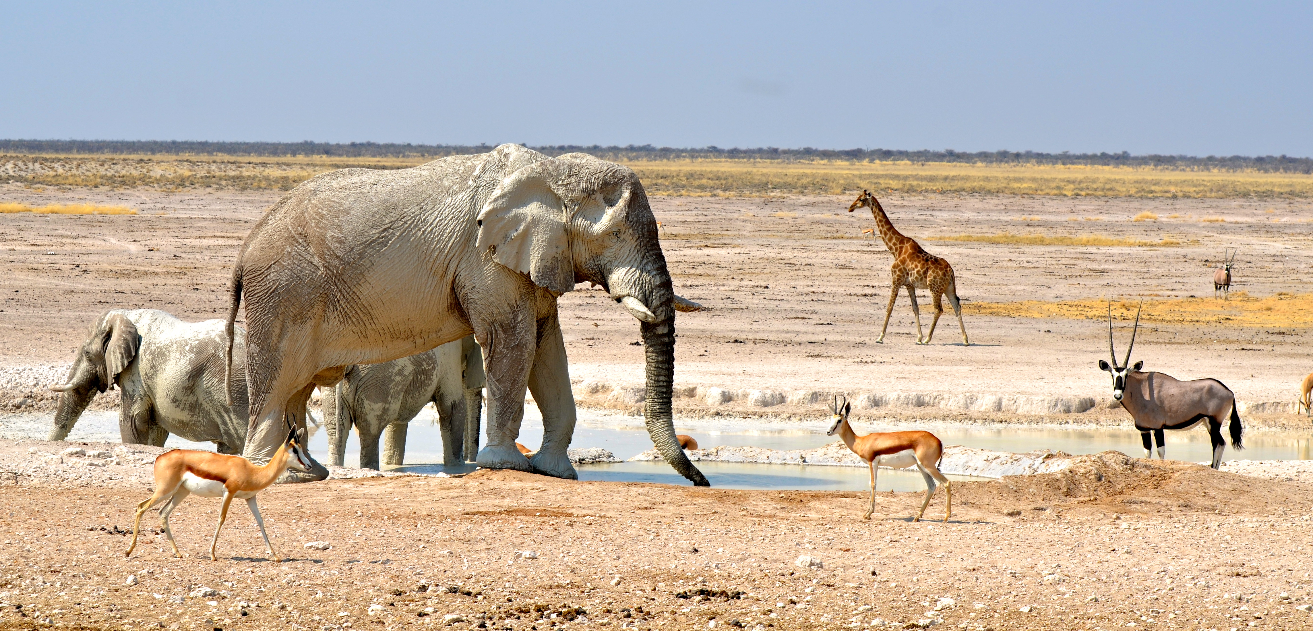 Little Ongava Namibia