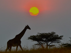 World's Best Sunsets